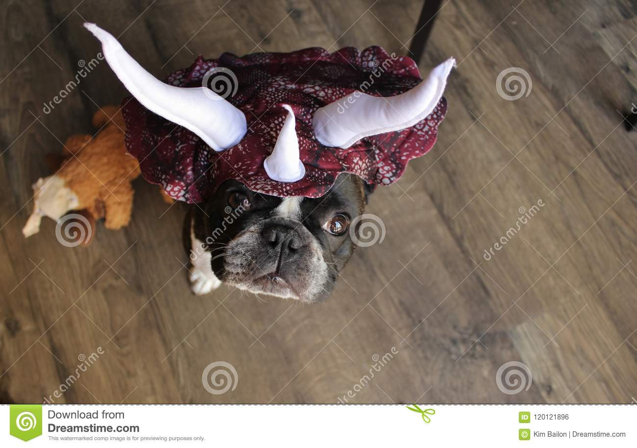 French Bulldog as a Stegosaurus