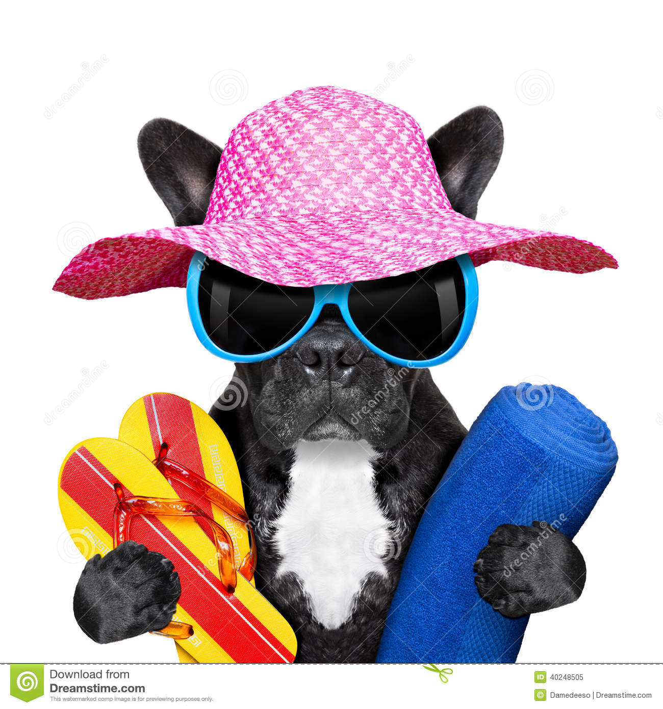 ff3676bfdeaf61 French Bulldog Vacation Stock Images - Download 317 Royalty Free Photos