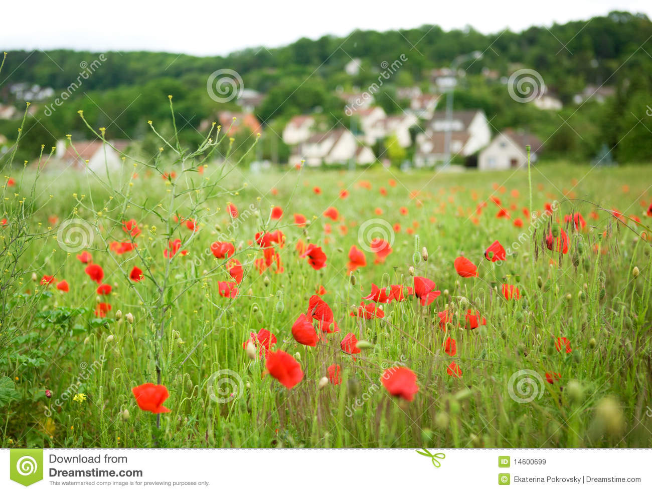 French Countryside With Blossoming Poppies