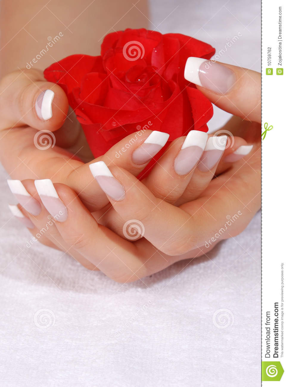 French manicure and scarlet rose