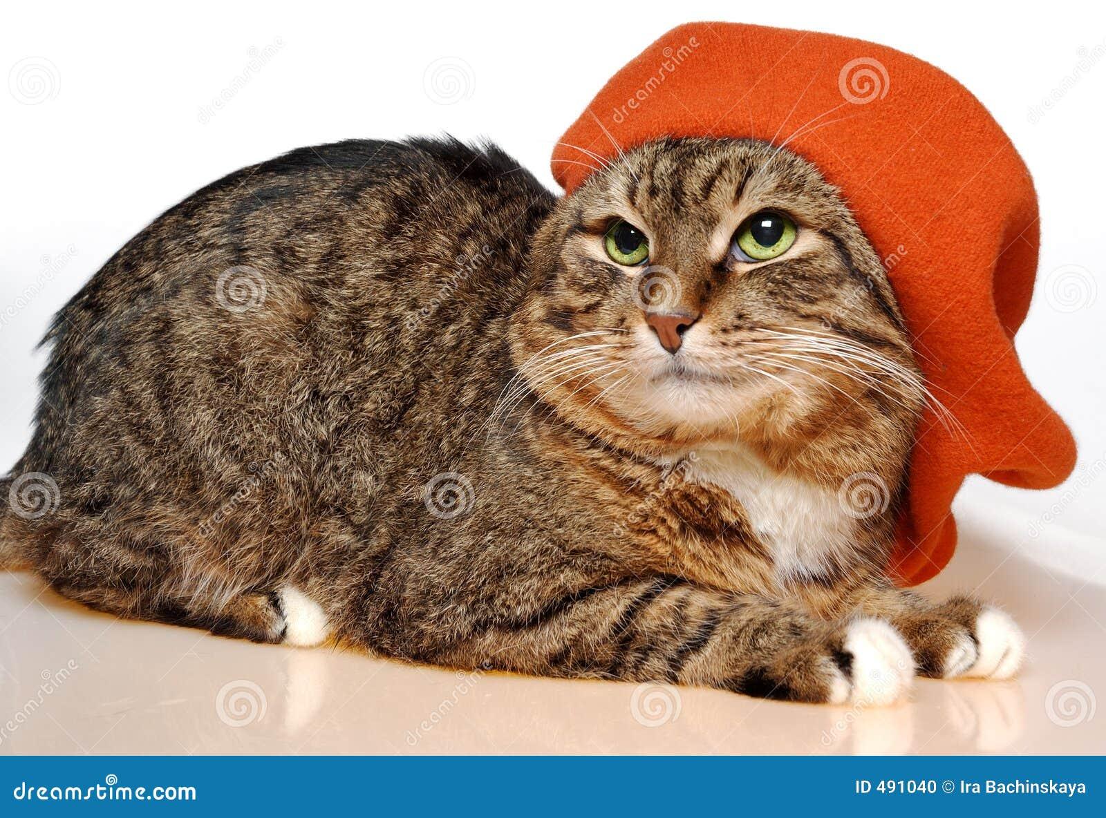 French painter cat stock photo  Image of lovely, feline - 491040