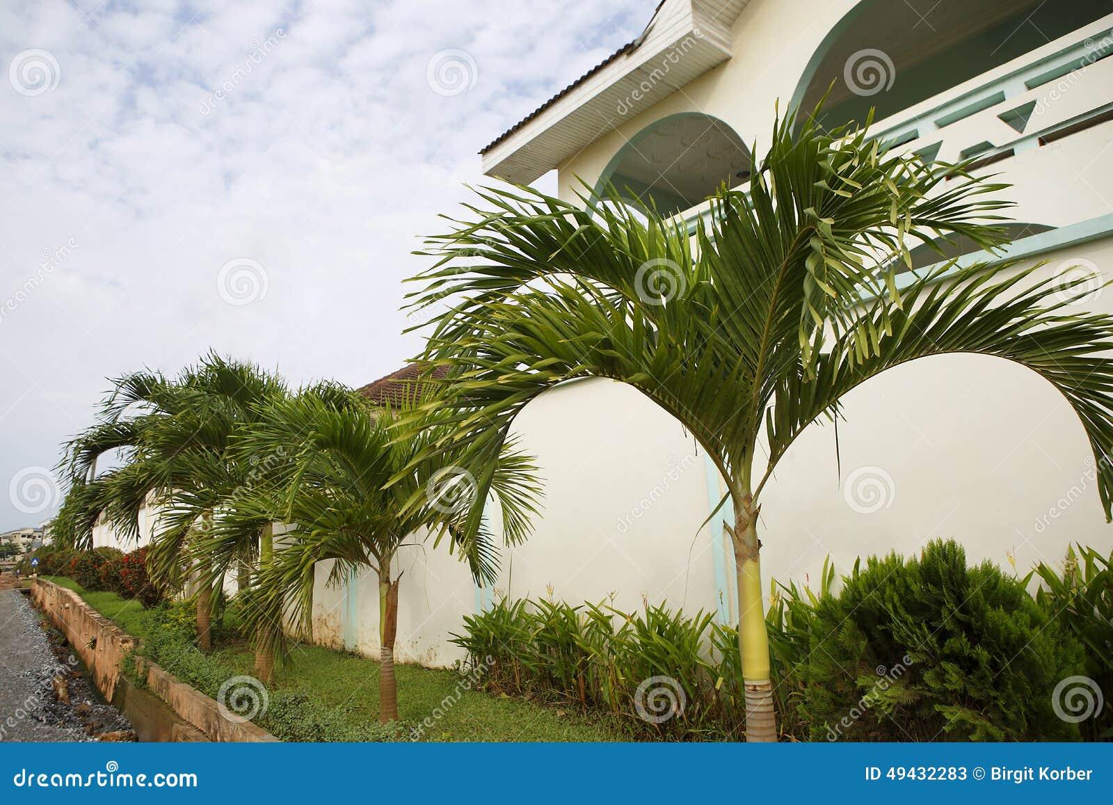 Frente blanco hermoso de la casa con las palmeras verdes - La casa de las palmeras ...