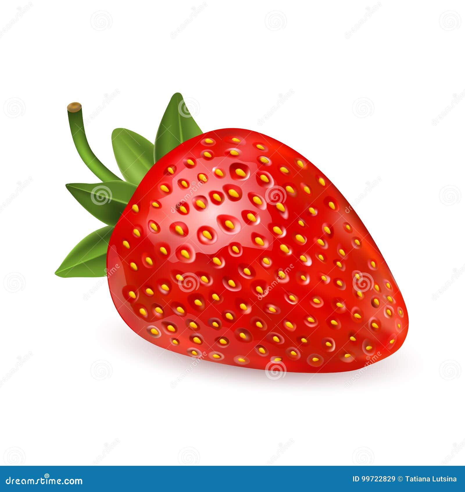 Fresa Fruta dulce iconos del vector 3d fijados Ilustración realista Vector realista del icono de la fresa