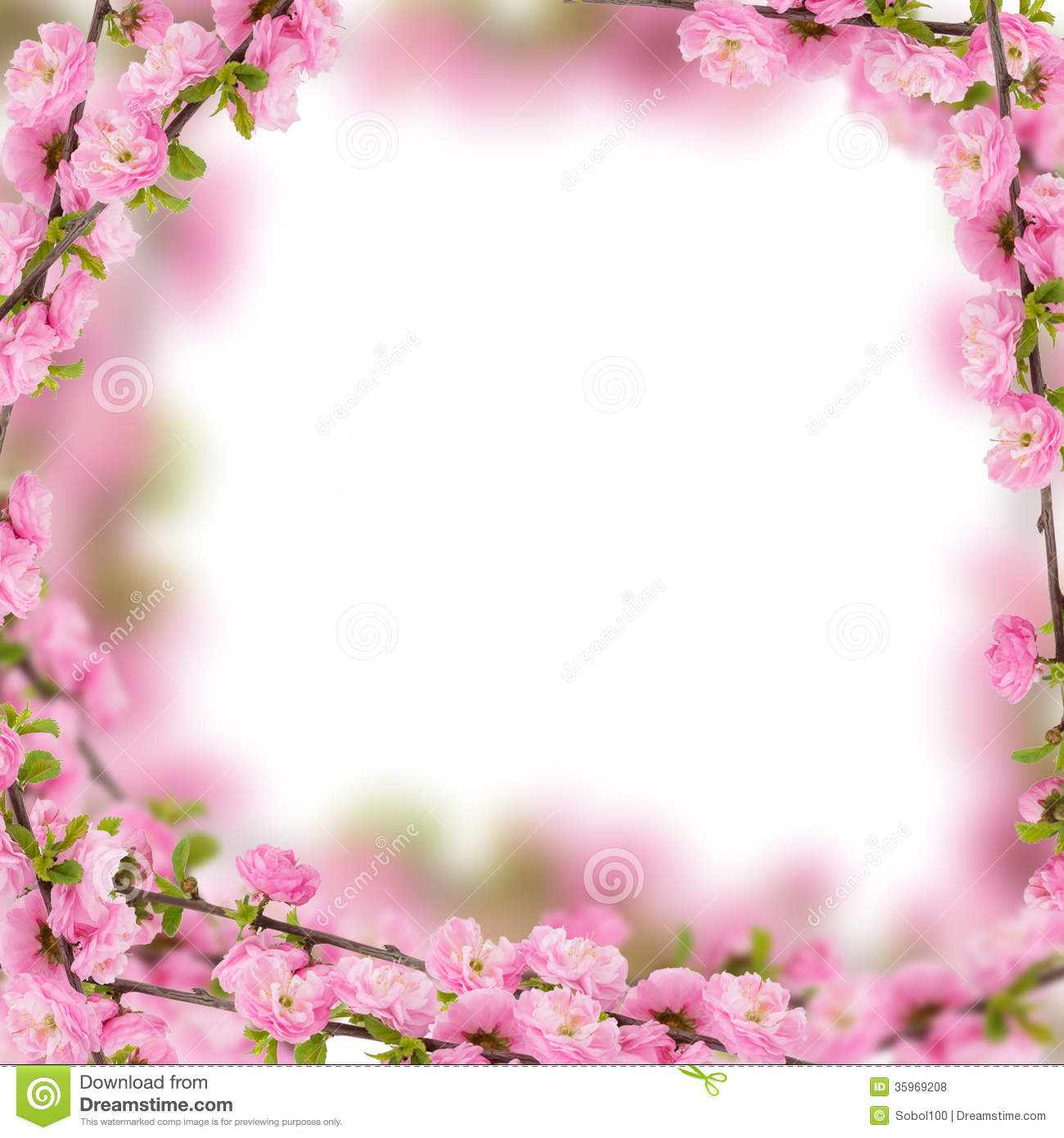Fresh Almond Flowers On Pink Background Royalty Free
