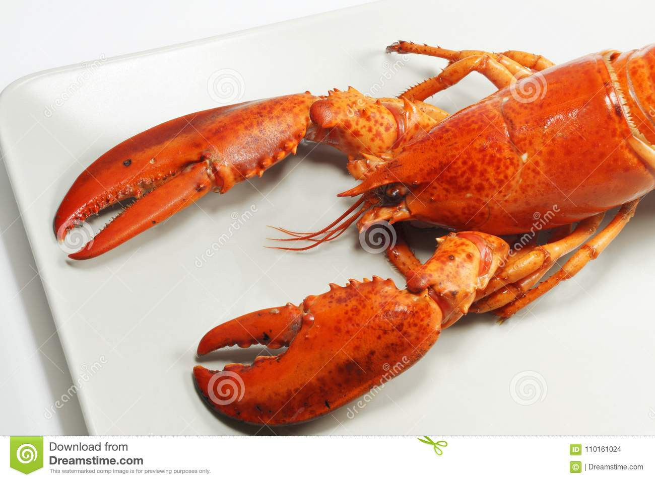 Fresh american lobster, whole silhouette on a light background