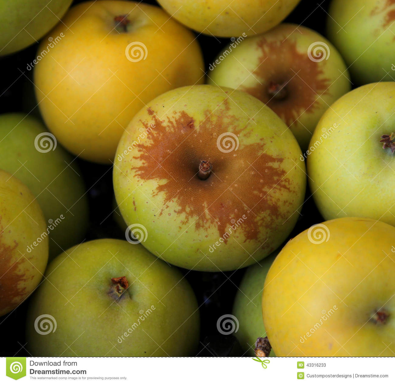 Download Fresh apples. stock image. Image of apples, view, green - 43316233