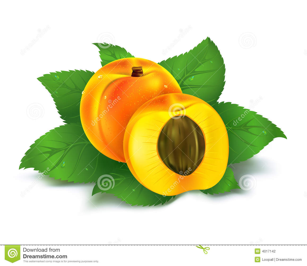 Fresh apricot fruit with cut