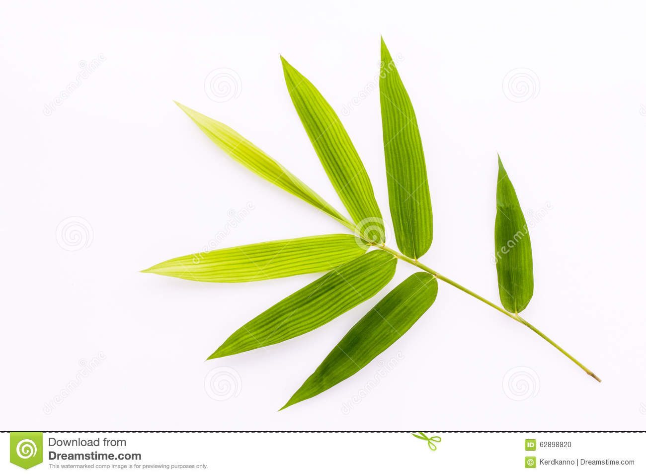 Fresh bamboo leaves border with water drop isolated on white background, botanical zen forest, tropical spa decoration, backdrop