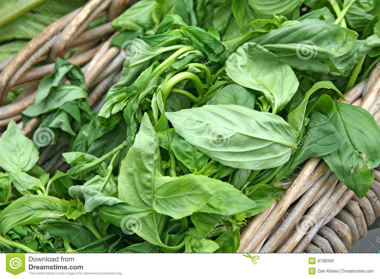 mm522 sweet basil marketing plan Shop a large variety of basil seeds and plants that are rich in flavor and provide numerous health benefits at burpee  sweet and fragrant basil with a mild citrus .