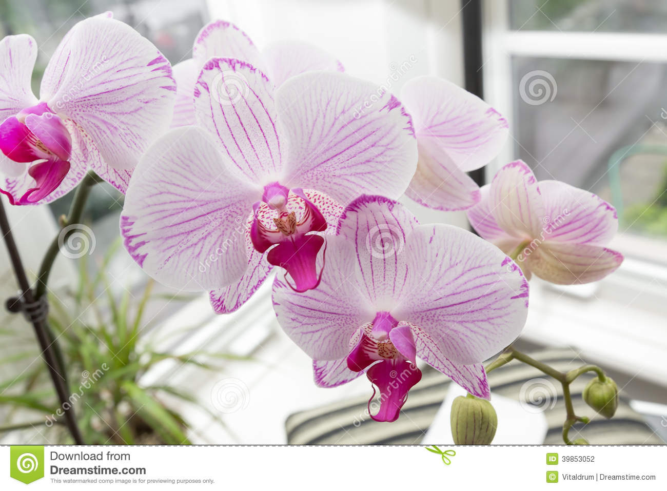 fresh beautiful orchid flowers inside home garden beautiful fresh home