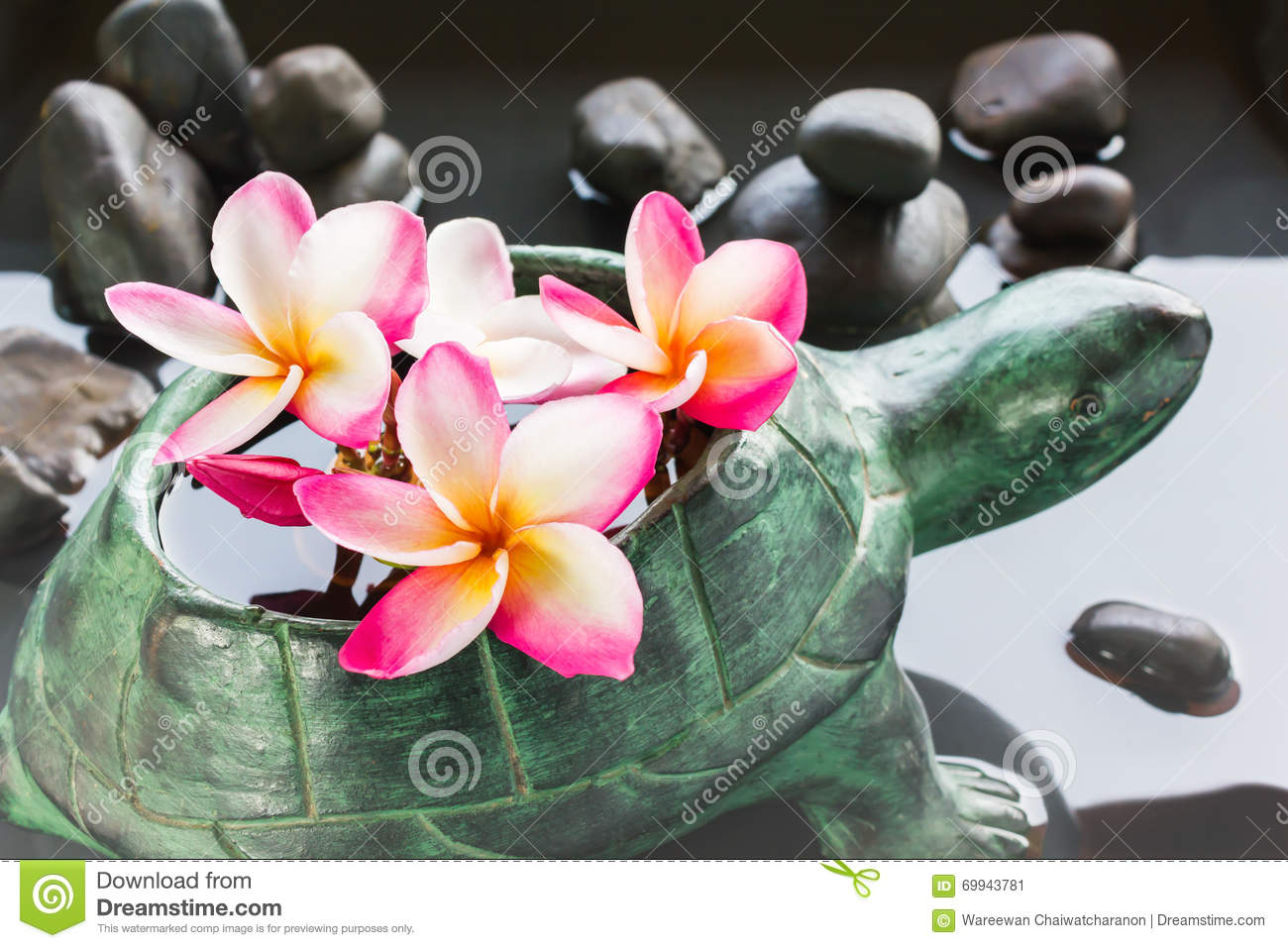 The Hawaiian Collection |Plumeria Bunches