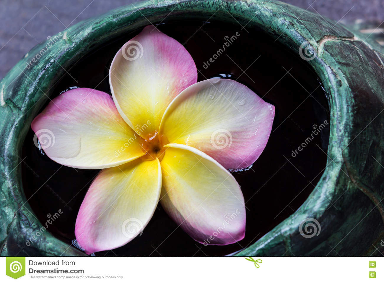Sweet Pink Flower Plumeria Bunch And Natural Background ... |Plumeria Bunches