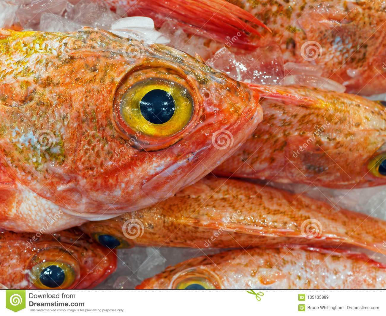 Fresh Big Eye Ocean Perch, Sydney Fish Markets, Australia