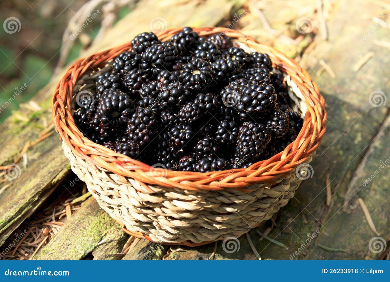 acheter en ligne 9f975 e47b7 Fresh Blackberry Basket From The Forest Stock Photo - Image ...