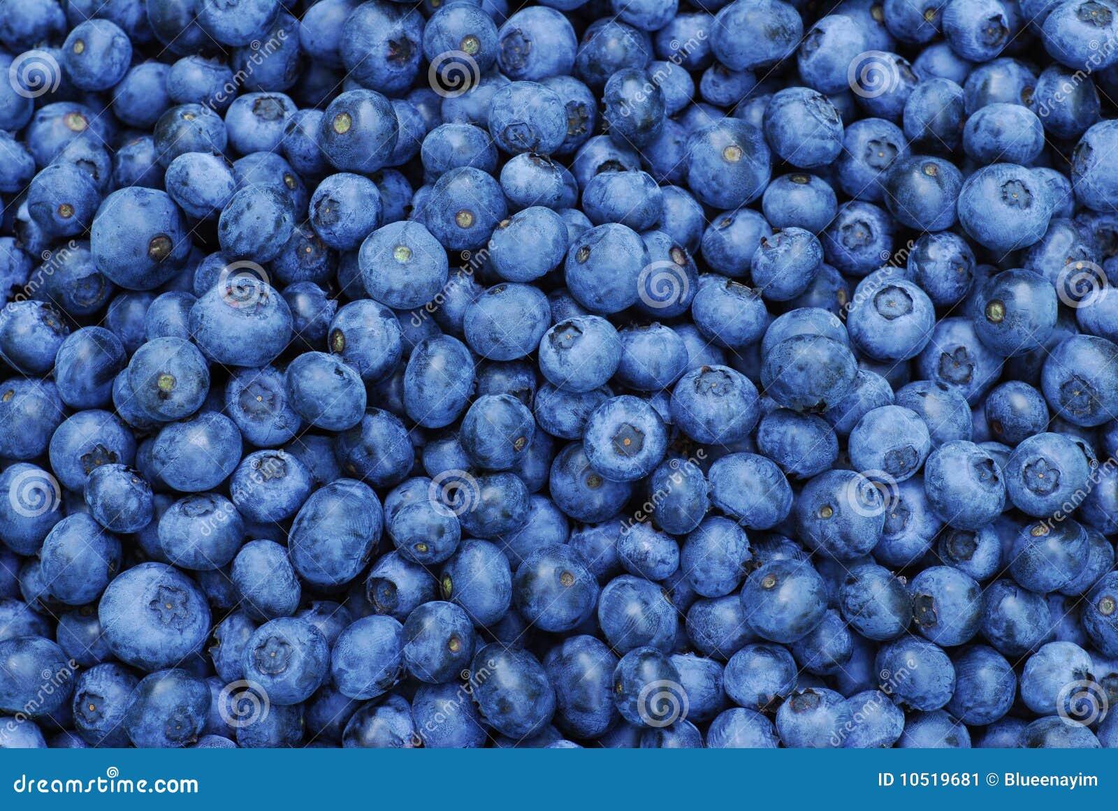 Fresh Blueberry Background stock image  Image of harvest