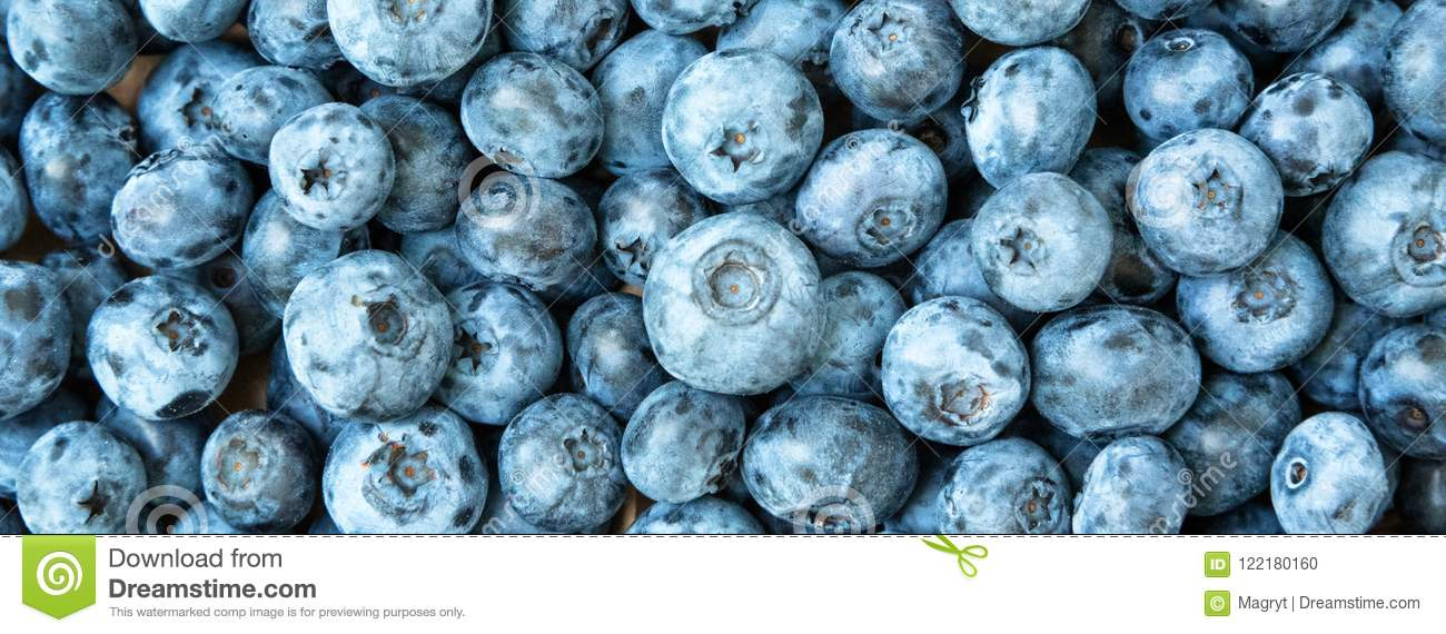 Fresh Blueberry Background  Blueberries Texture Close Up