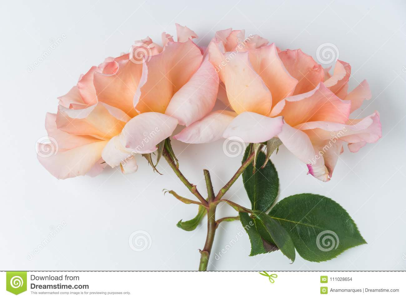 Fresh Bunch Of Pink Roses Flowers Stock Photo Image Of Delicacy