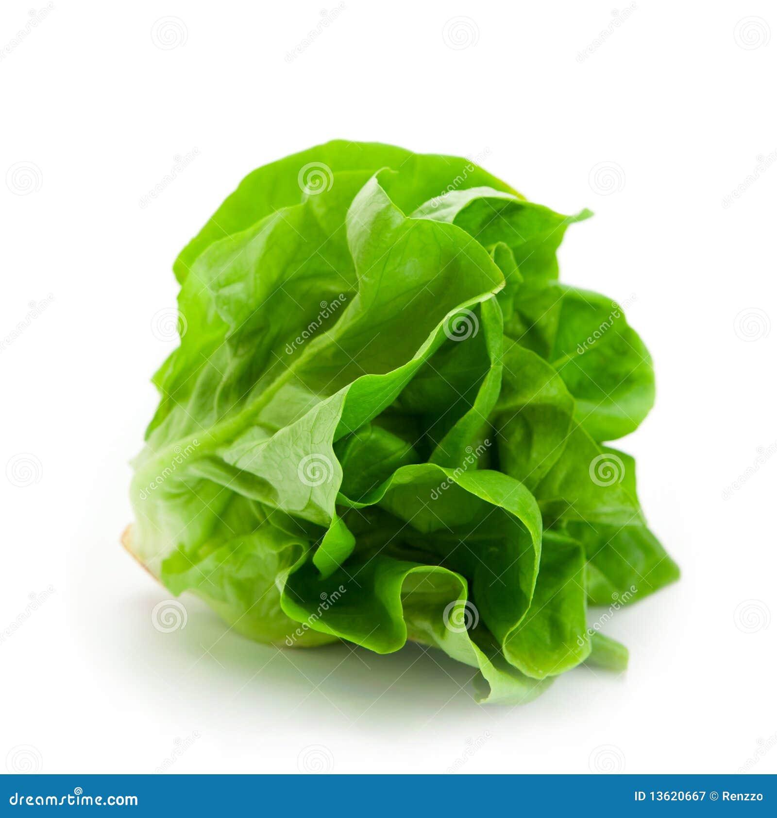 Fresh butterhead salad lettuce isolated on white