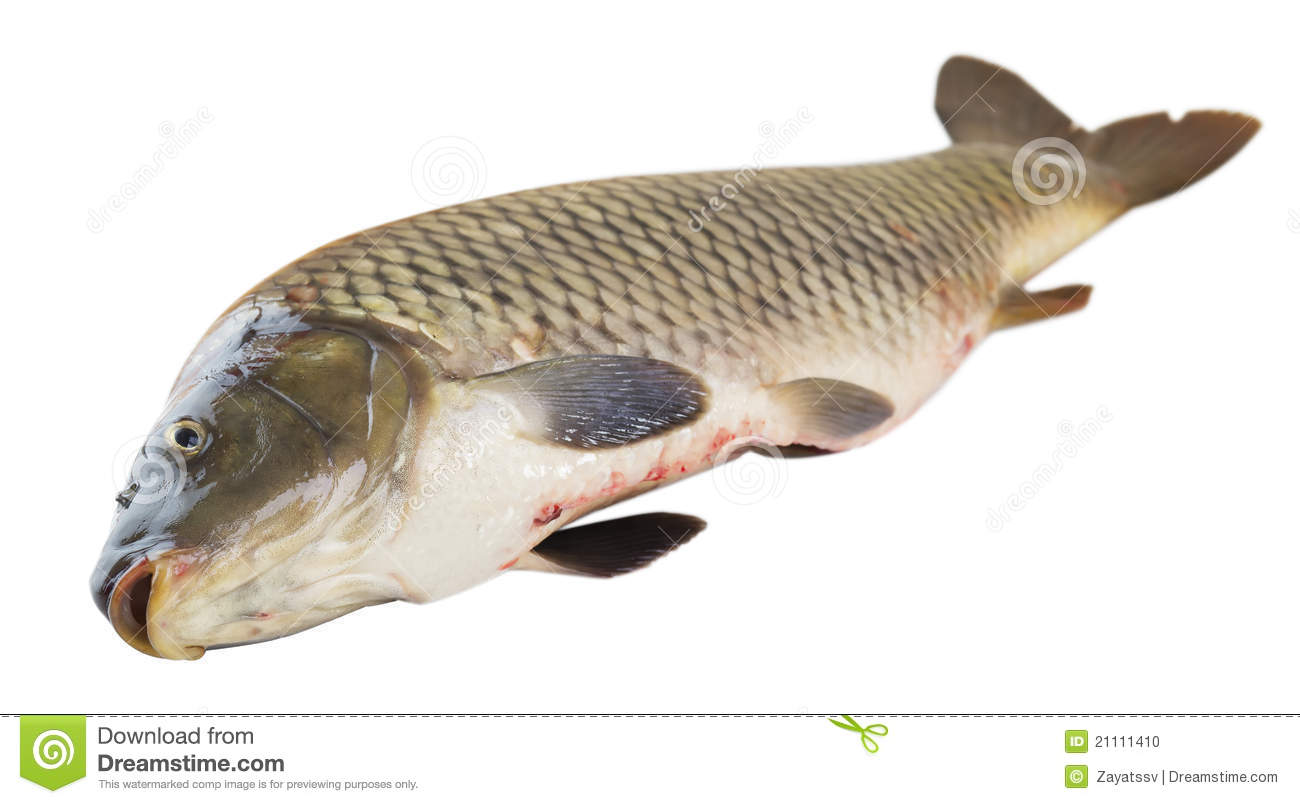 salted fish thesis Thesis aquaculture ) - download as pdf which are specific to aquaculture 1 those fish farmers who will be able to or salt waters niloticus using.