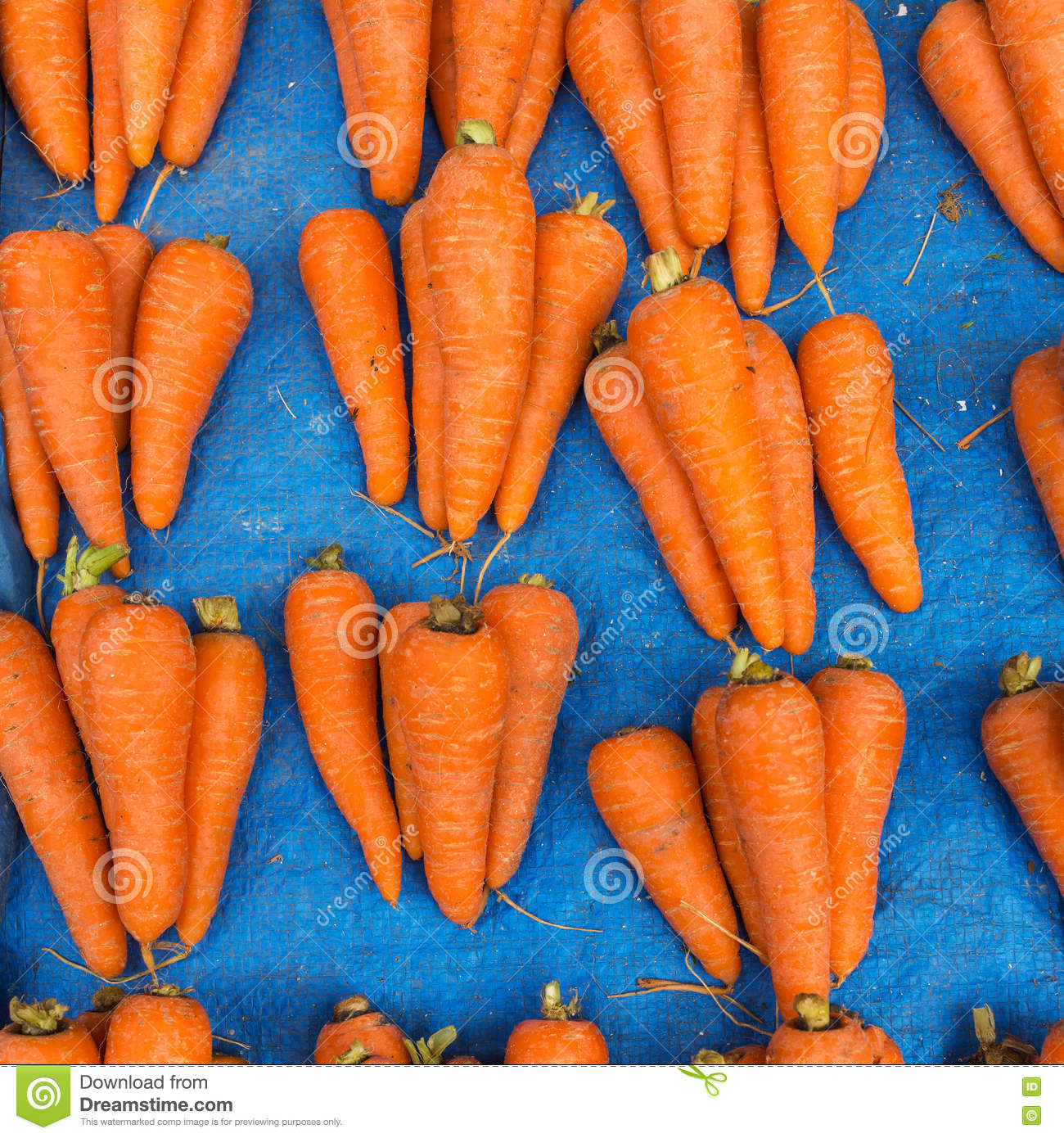 Fresh carrot batches on the market