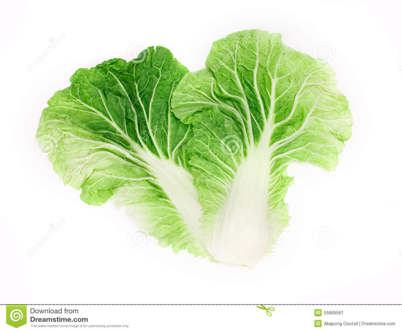 Fresh Chinese Cabbage Leaf On A White Background Stock ...