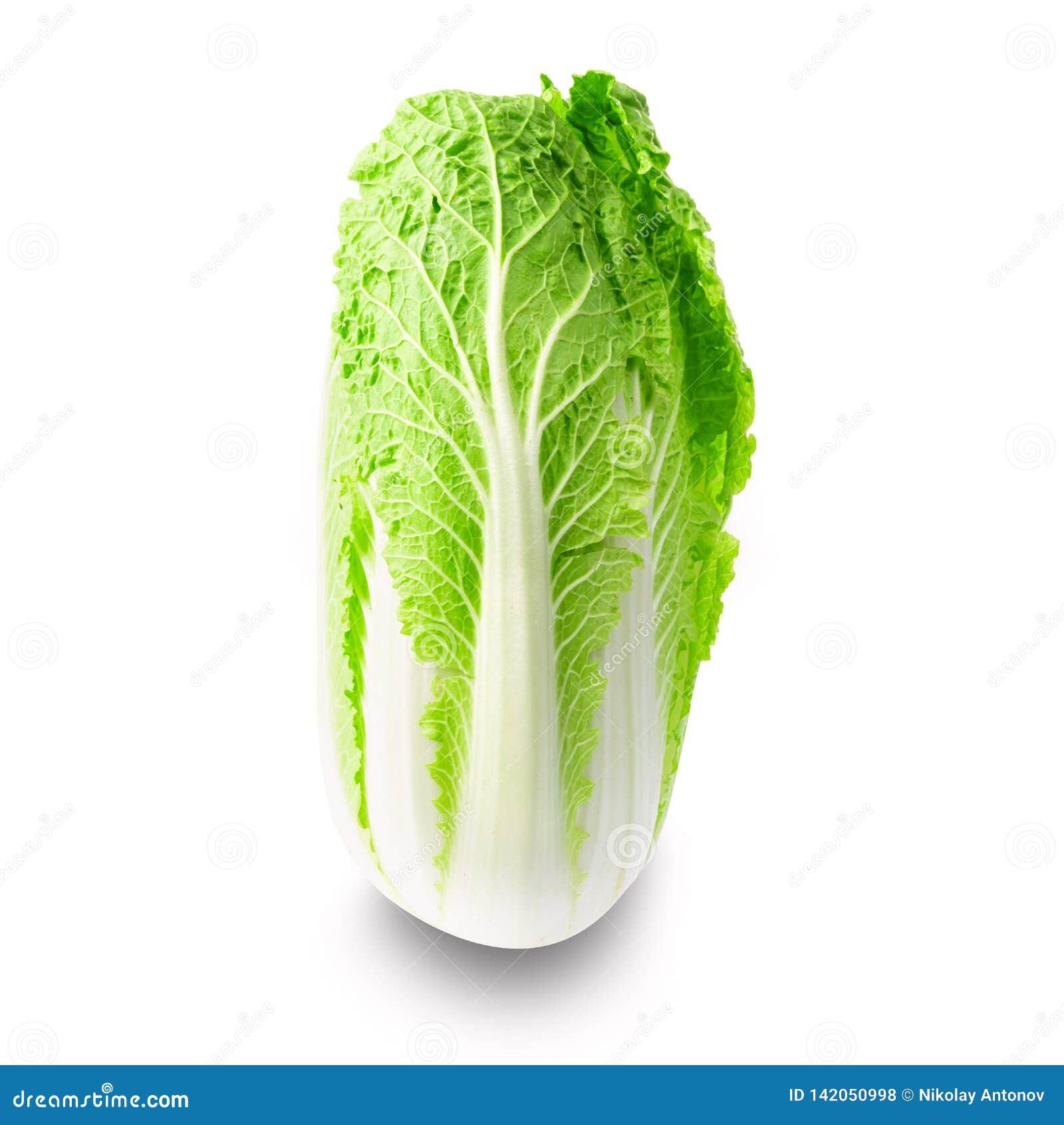 Fresh chinese napa cabbage isolated on white background
