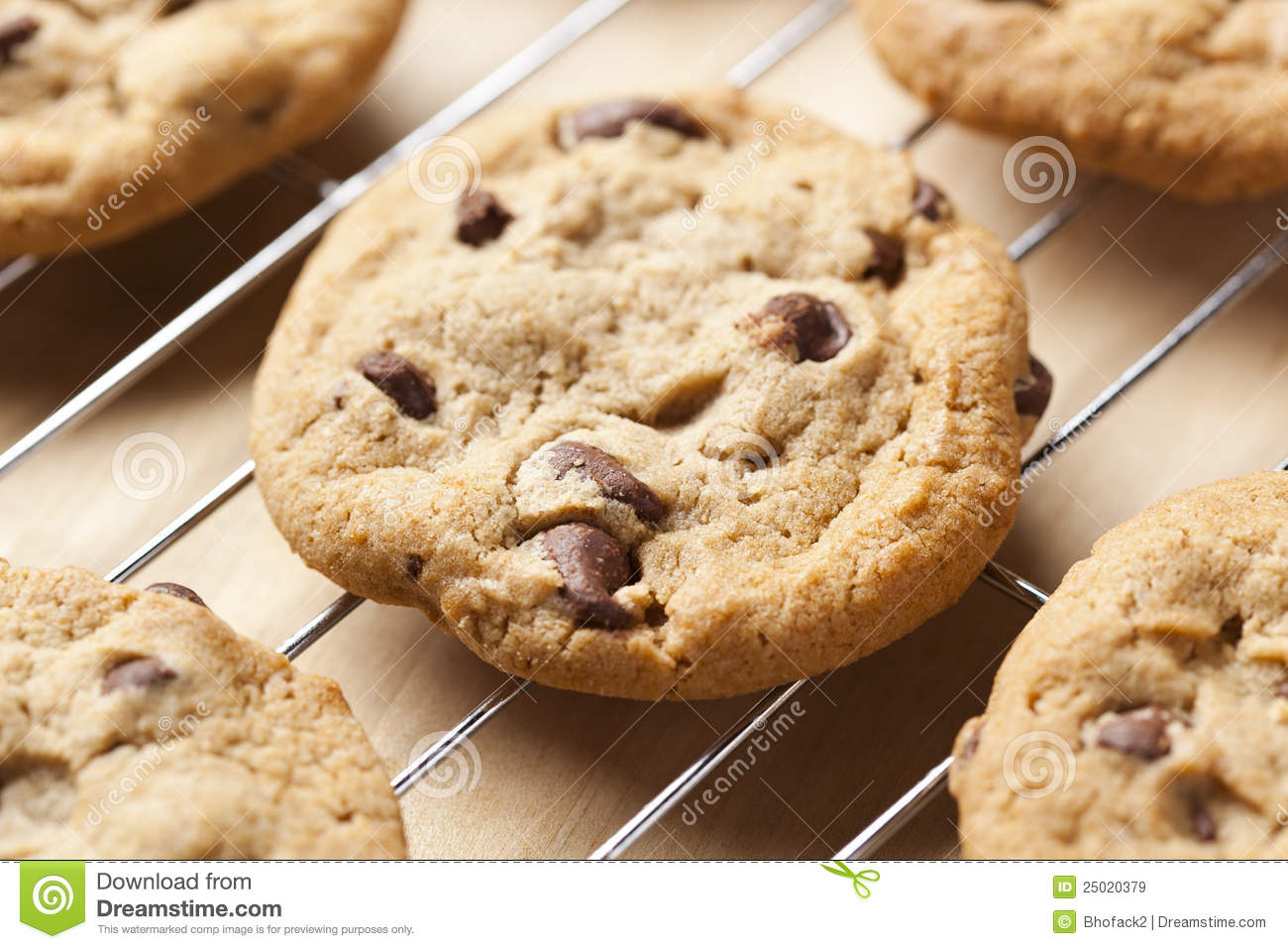 fresh chocolate chip cookies royalty free stock images image