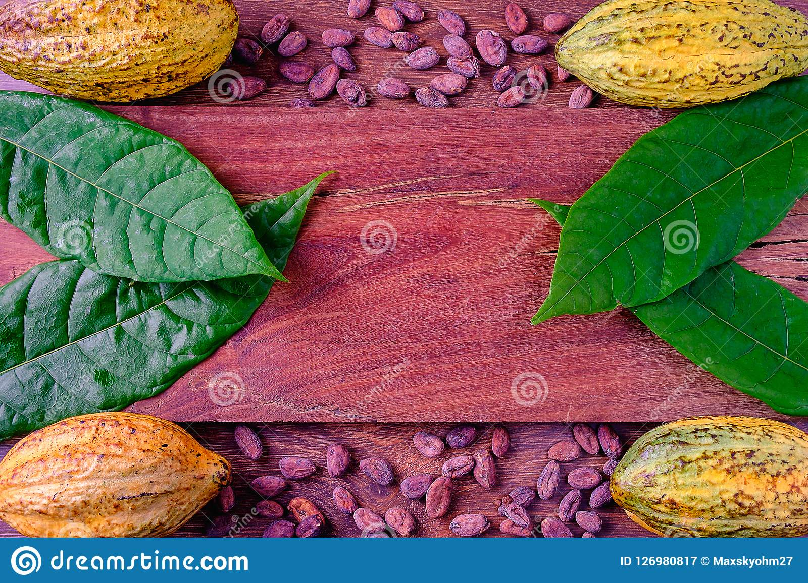 Fresh Cocoa and CocoaBean