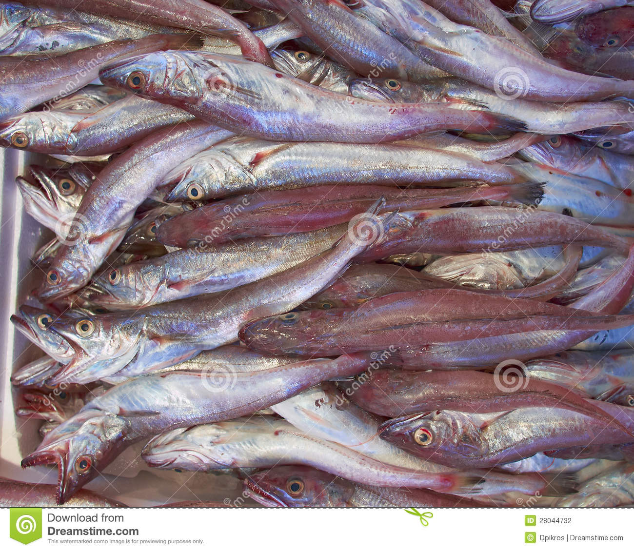 Fresh cod fish bacala for sale stock photo image of for What is cod fish