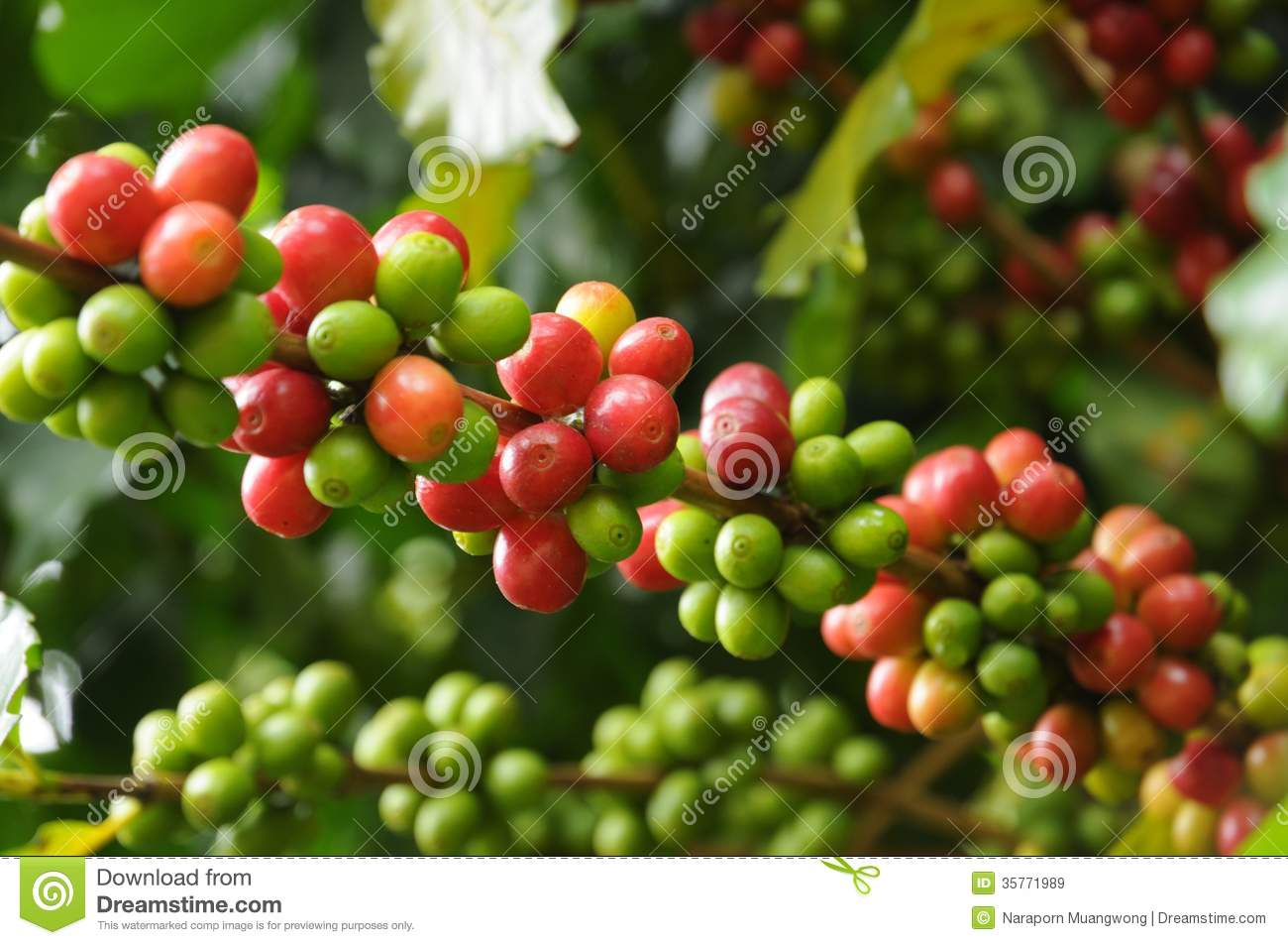 fresh coffee beans royalty free stock images image 35771989 free coffee pot clip art Empty Coffee Pot Clip Art