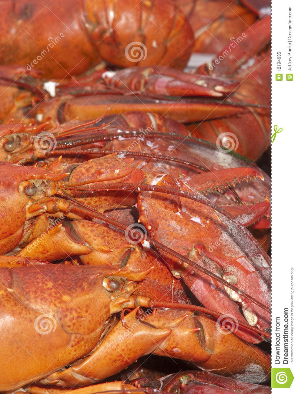 how to prepare fresh lobster