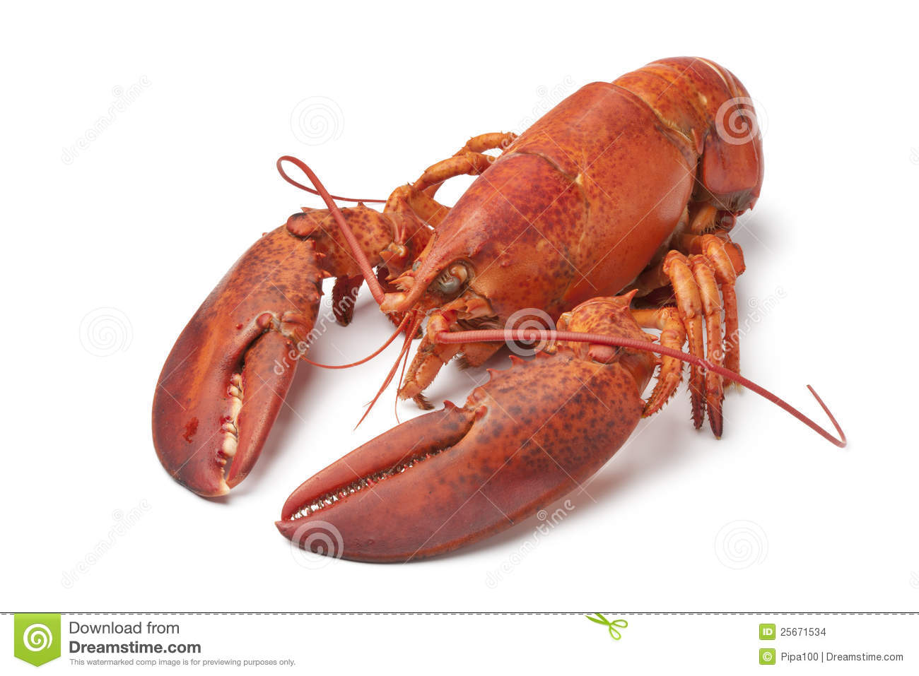 Fresh Cooked Lobster Stock Images - Image: 25671534