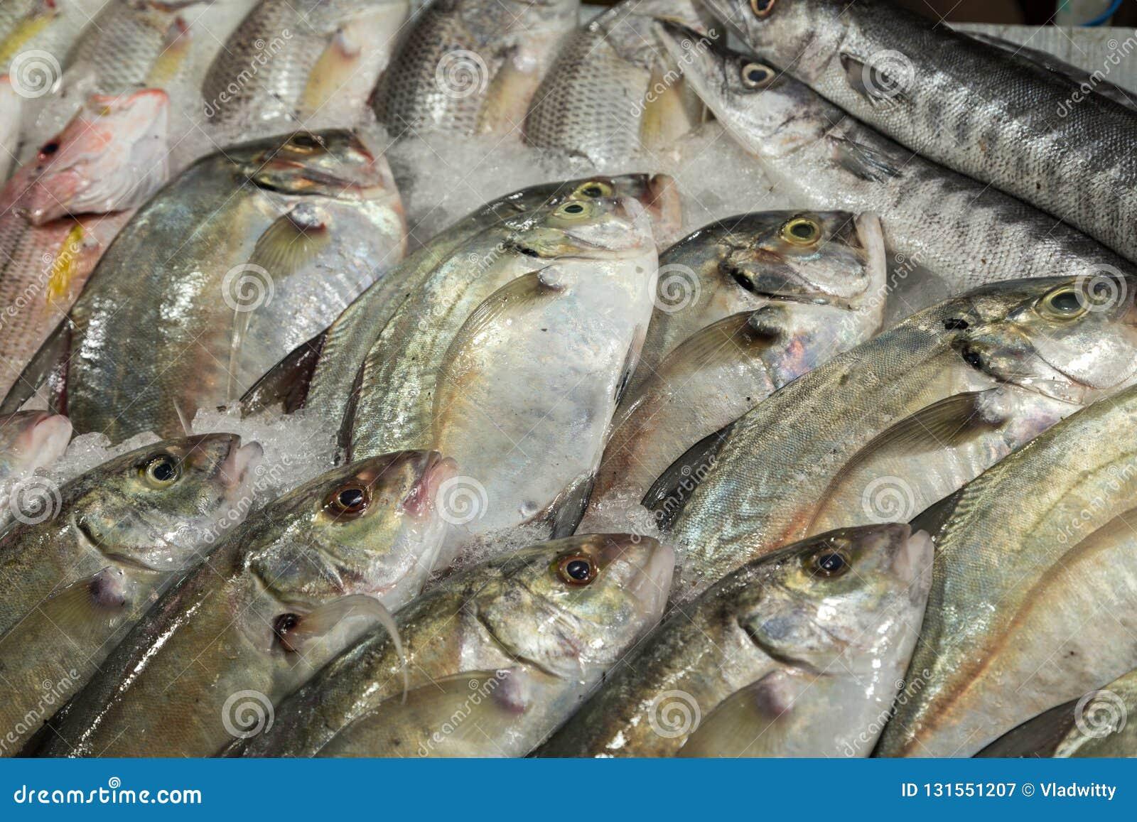 Fish market. Seafood background Sea food