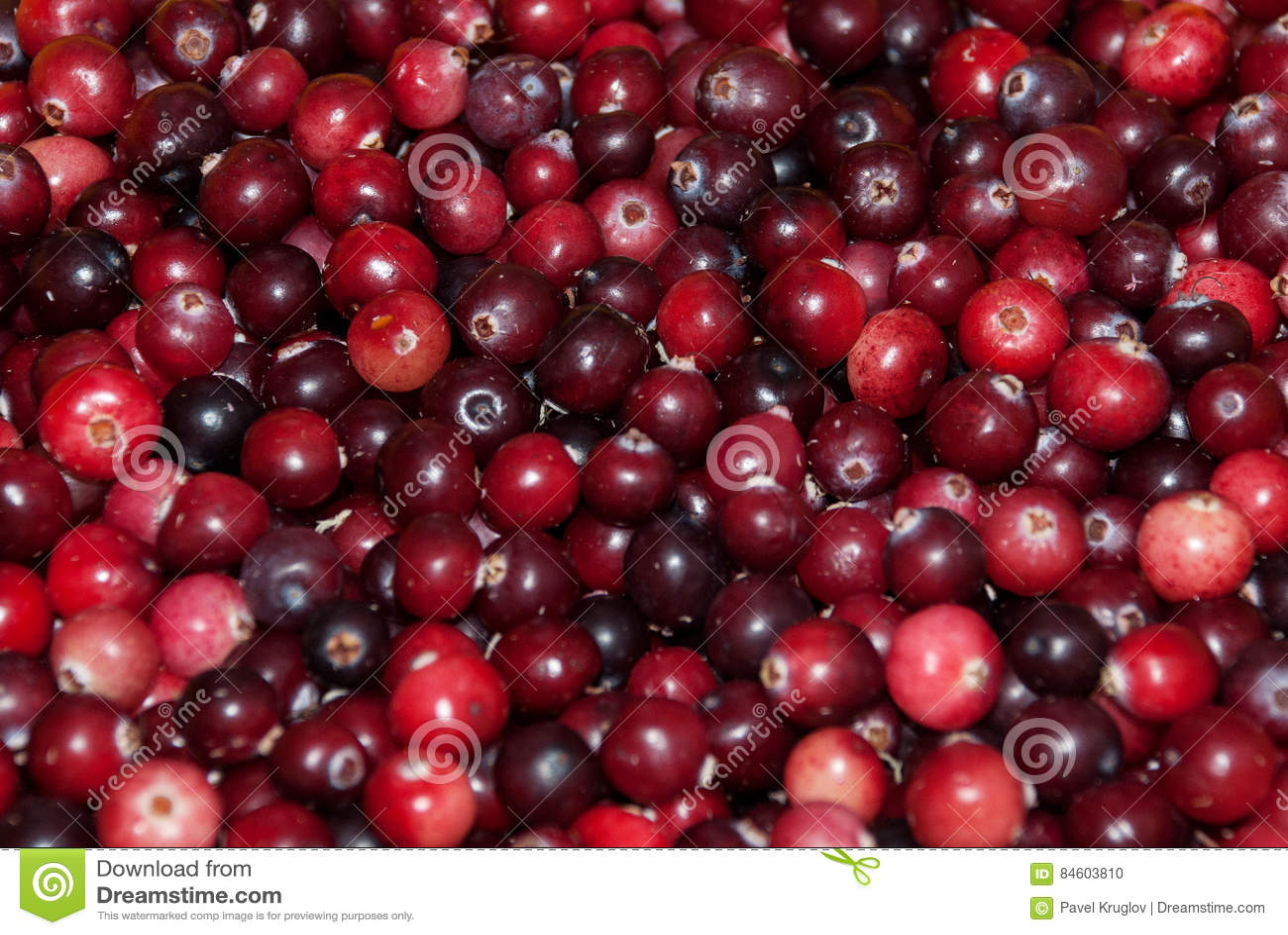 Fresh cranberry wallpaper