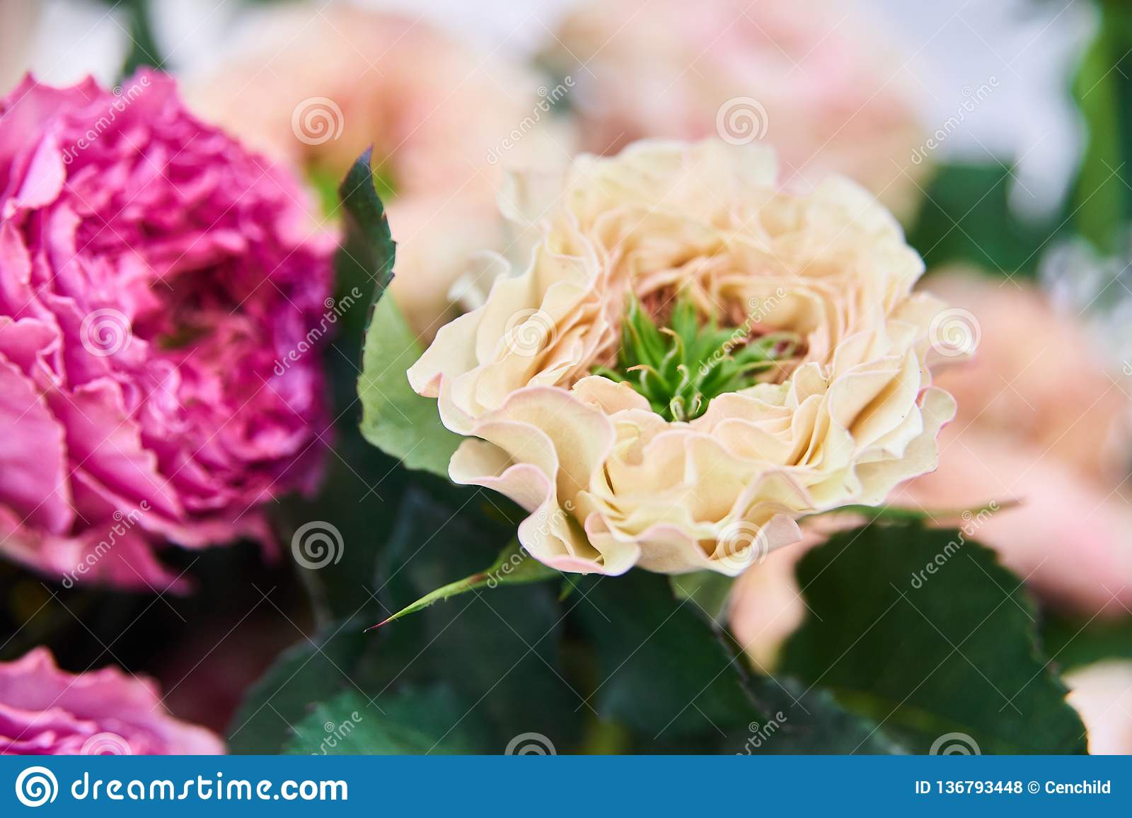 Fresh Cut Roses And Arrangements In Florist Shop Tracking