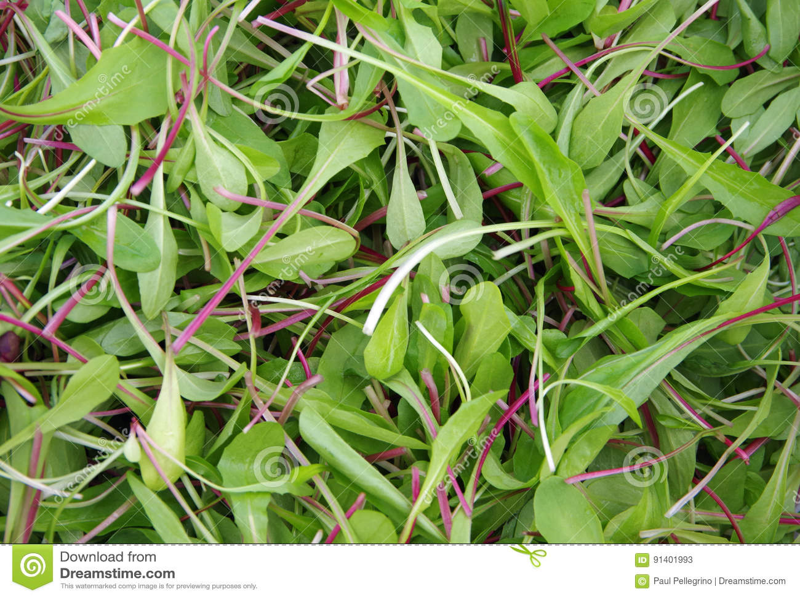 Fresh cut salad greens