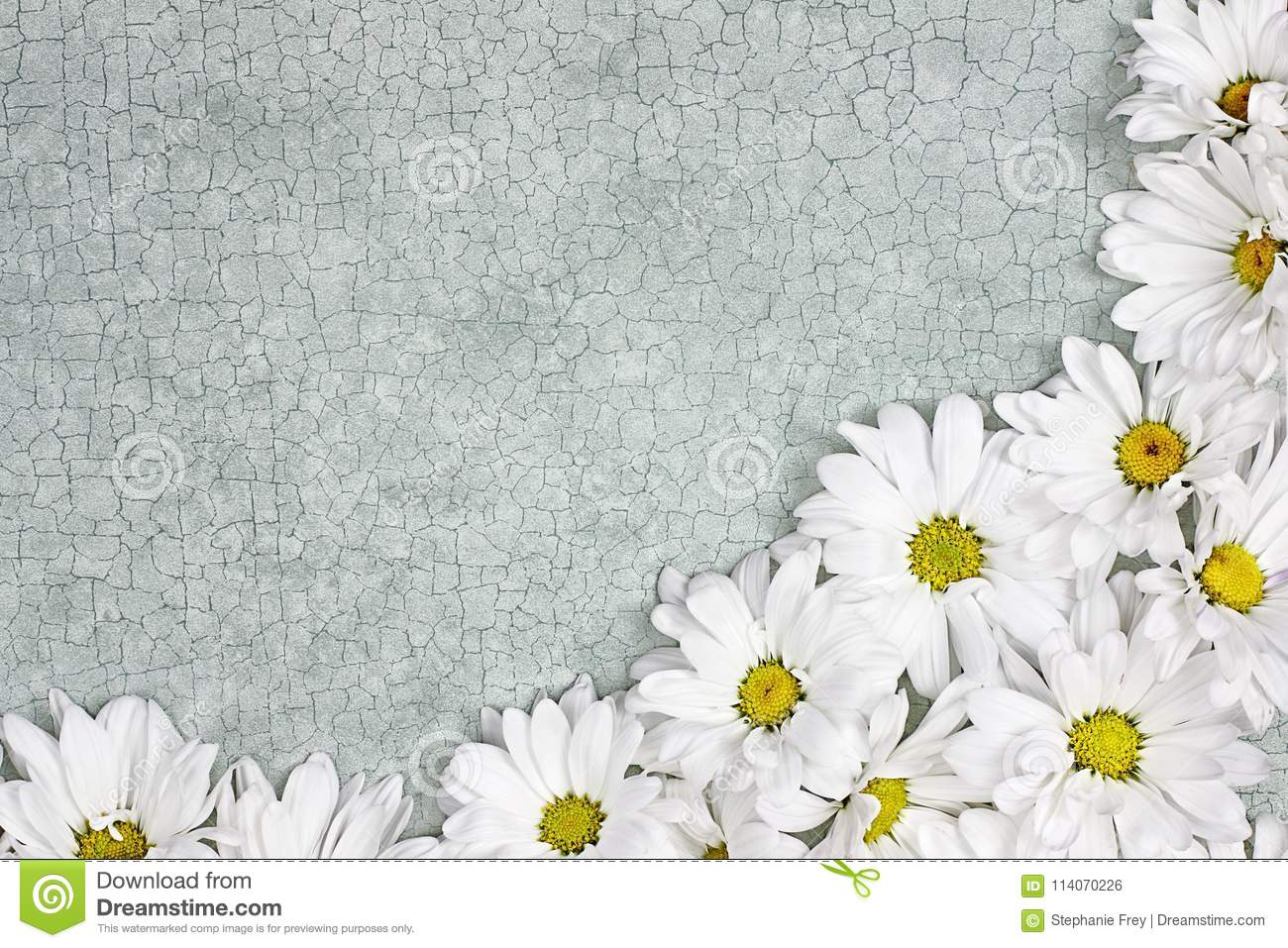 Daisy Flower Background With Space For Text Stock Photo Image Of