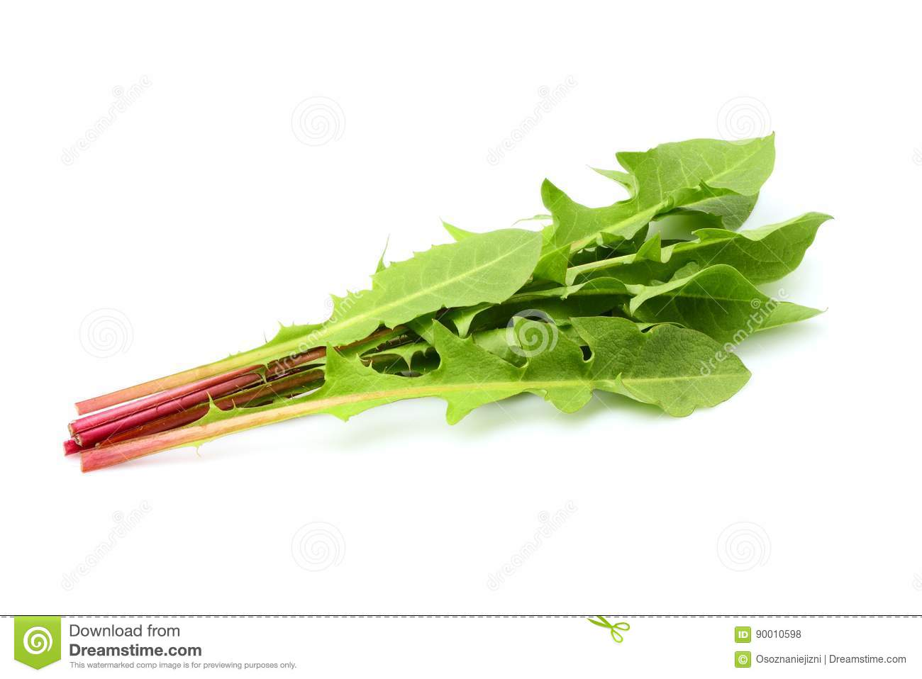 Fresh dandelion leaves isolated.