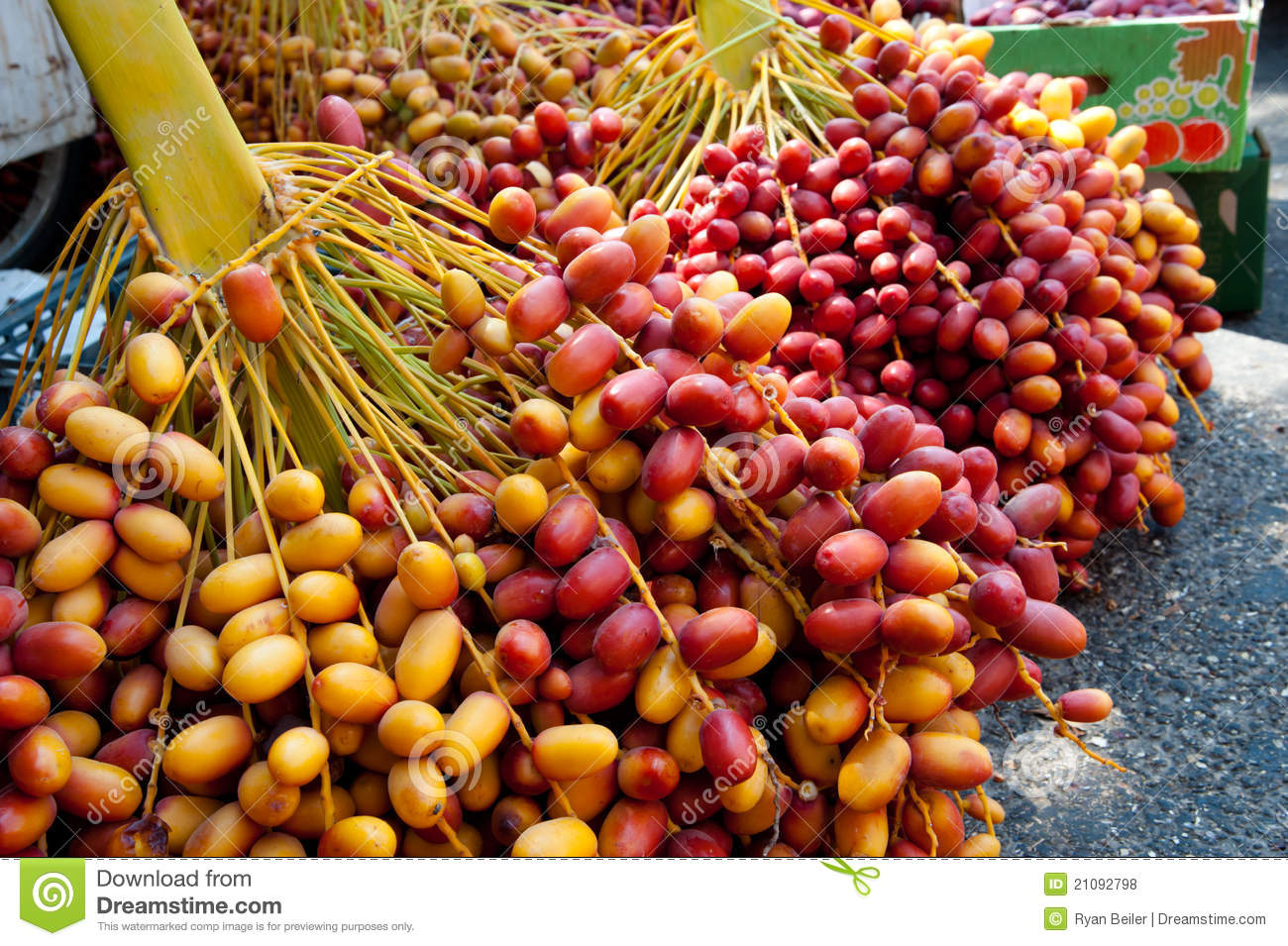 realeskort dates fruit