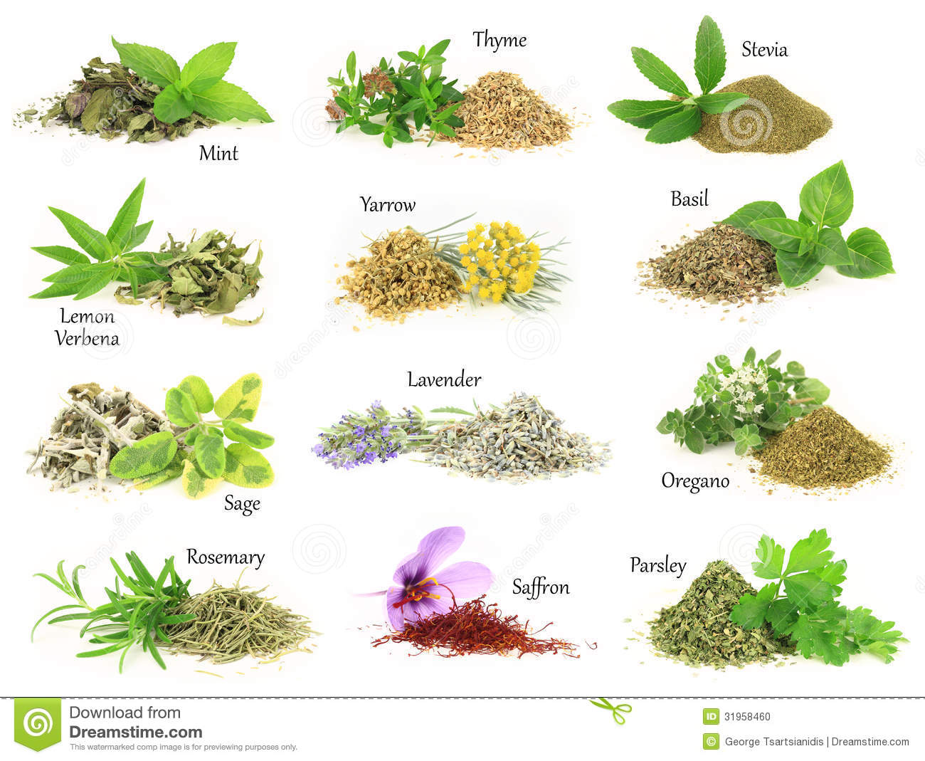 Fresh And Dry Aromatic Herbs Stock Photo - Image: 31958460
