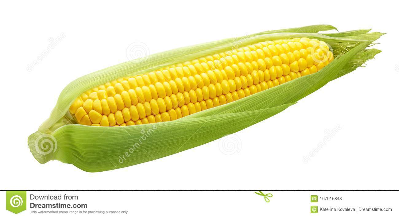 Fresh ear of corn isolated on white background