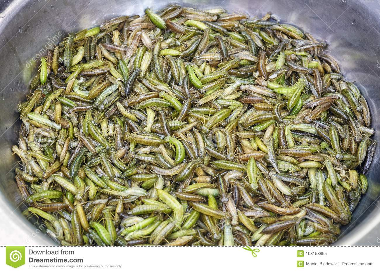Fresh Edible Insects In A Bowl On A Local Market, China  Stock Image