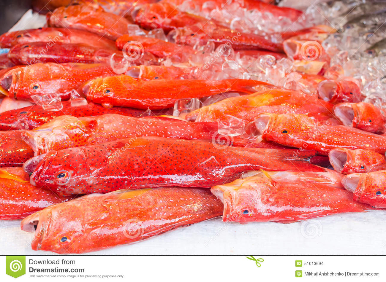 fresh exotic fish on ice in seafood market on boracay