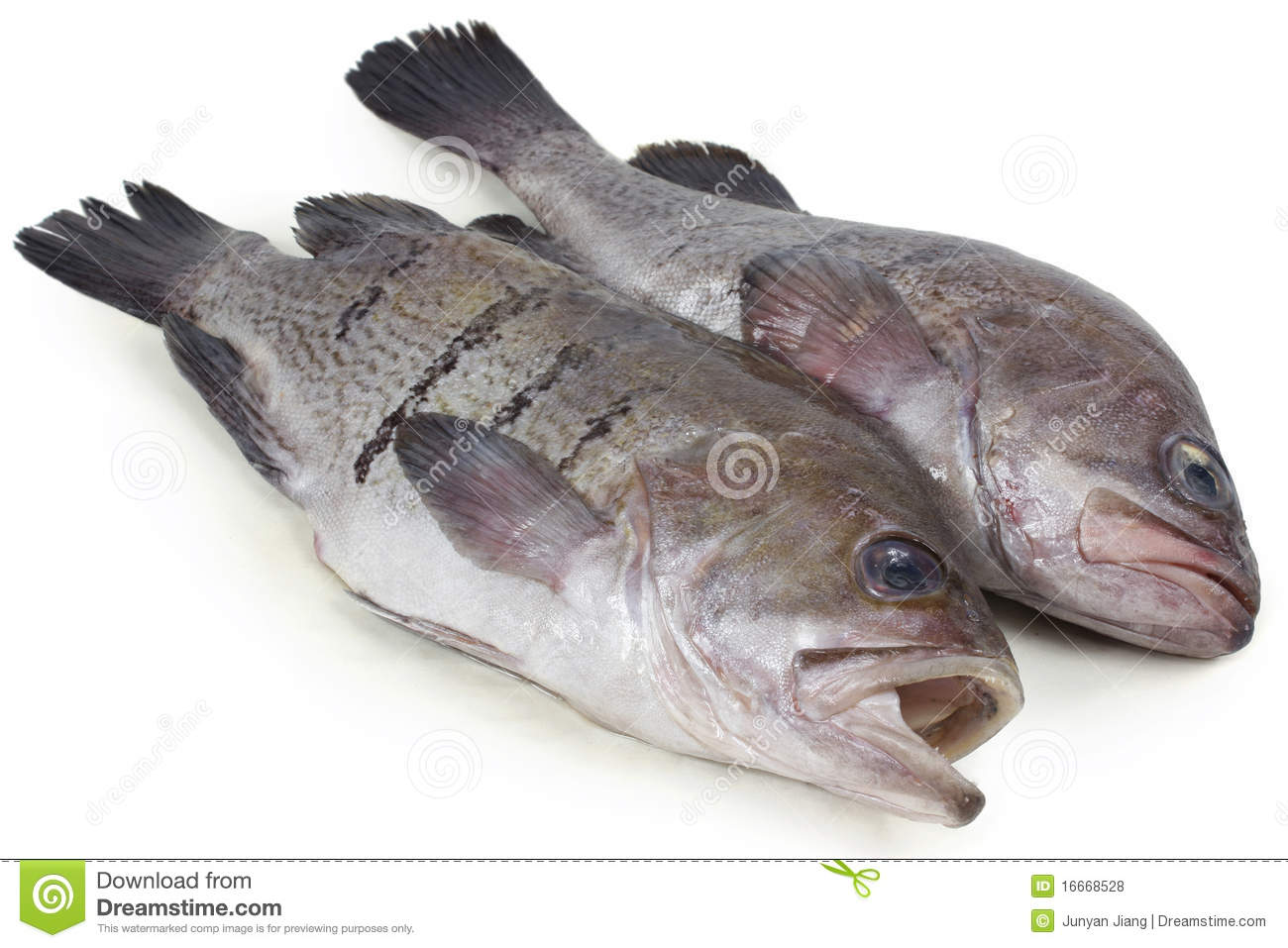 Fresh fish stock photo image of fishing marine cold for Whole foods fish on sale this week