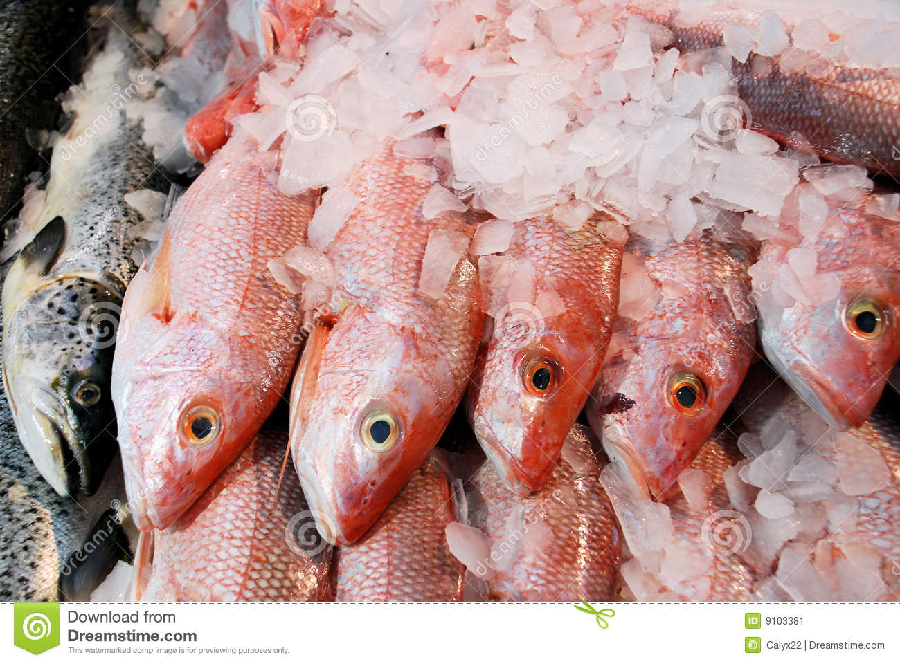 Fresh fish stock image image 9103381 for Stock fish for sale texas