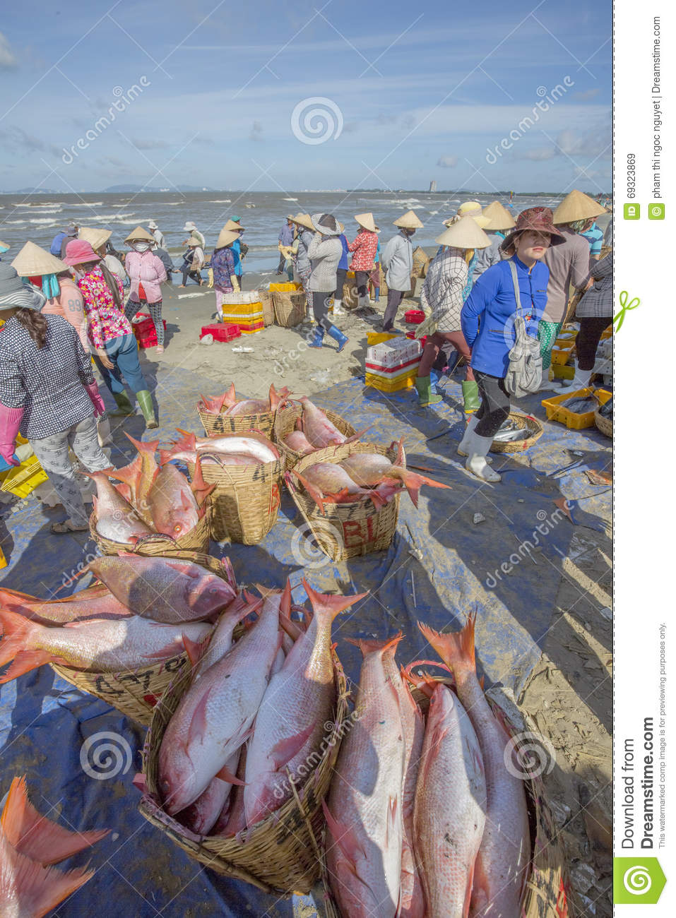 Fresh fish in basket on the beach editorial stock image for Closest fish market