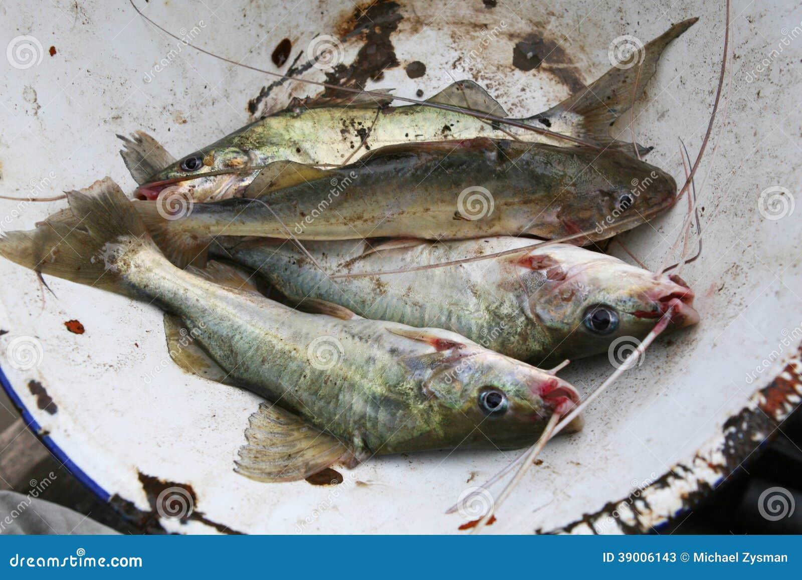 Fisherman S Catch Cat Food