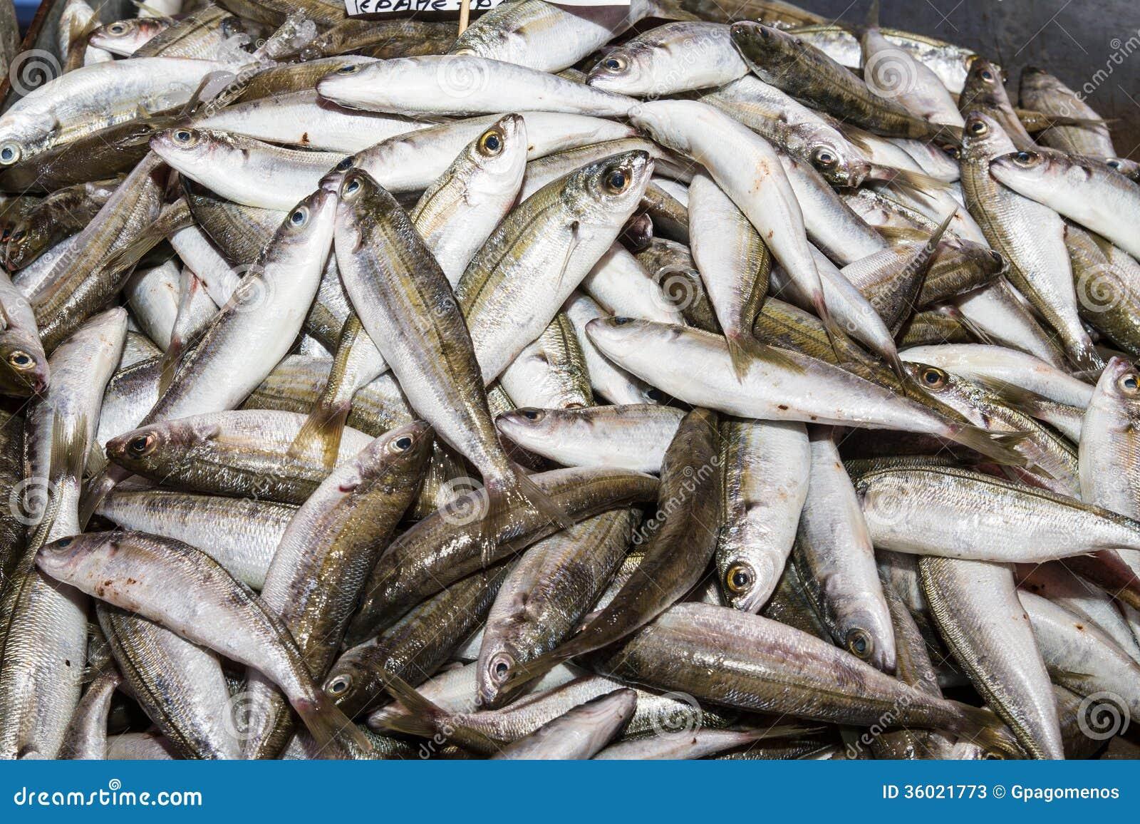 Fresh fish catch stock image. Image of cuisine, ingredient ...