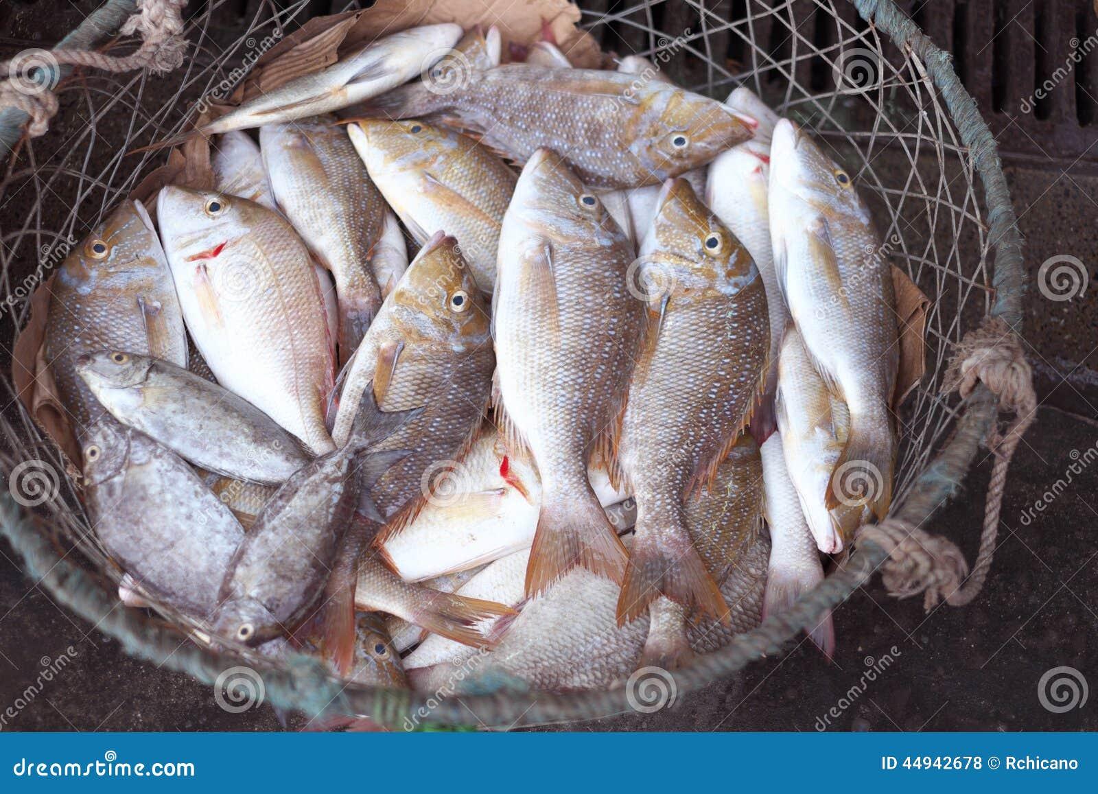 Fresh fish in dubai fish market stock photo image of for Fishing in dubai