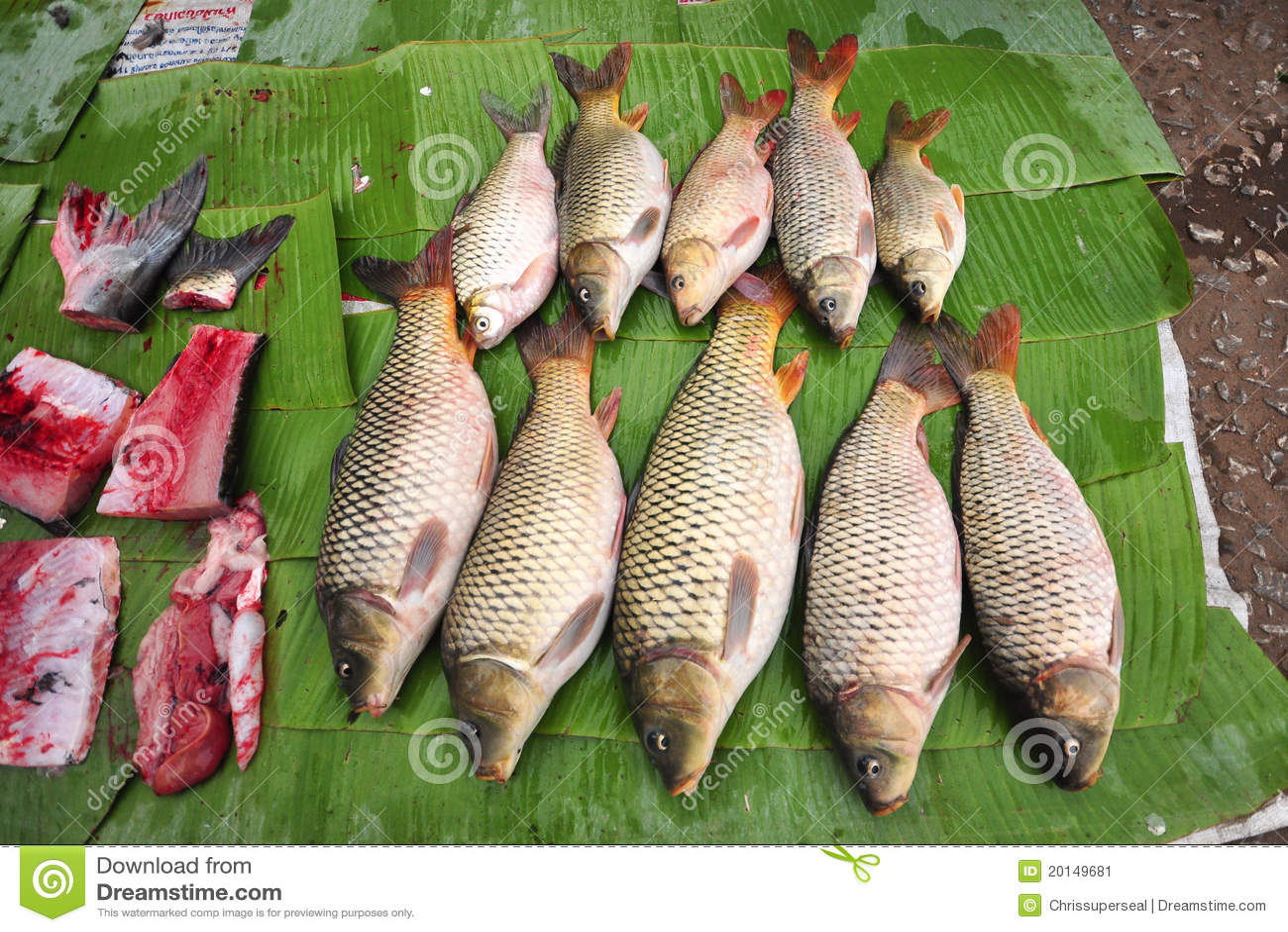 Fresh fish fresh market stock image image 20149681 for Fish stocking prices